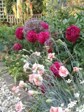 Pinks, Peonies, Alliums