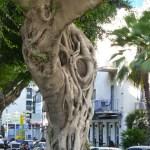Bauhaus Rothschild Boulevard Tel Aviv tree