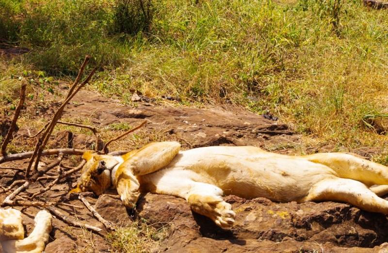 Safari Walk Nairobi