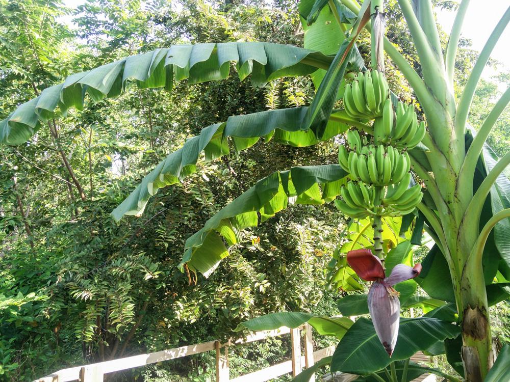 San Andres EcoFiwi
