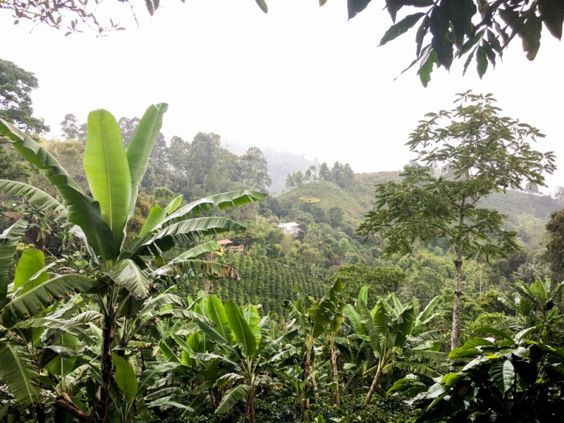 Kaffeezone Kolumbien