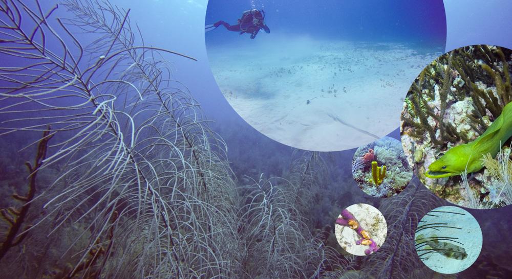 diving san andrés