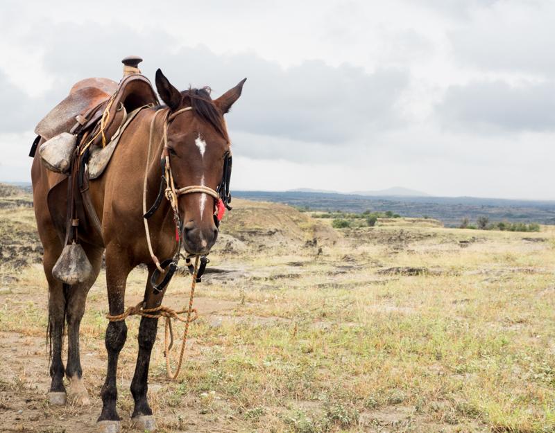 Tatacoa Wüste Kolumbien Reiten