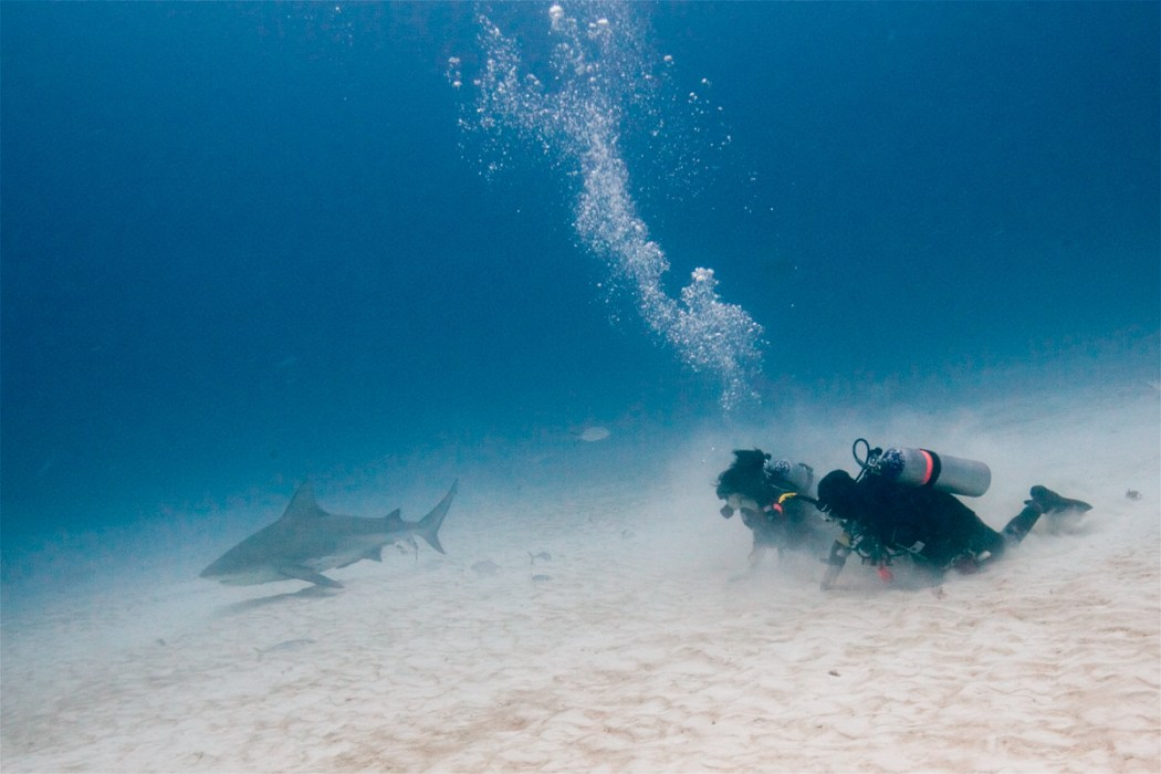 diving Bull sharks Playa del Carmen