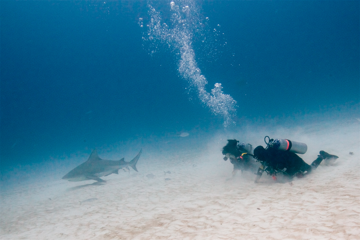 diving Bull sharks Playa del Carmen