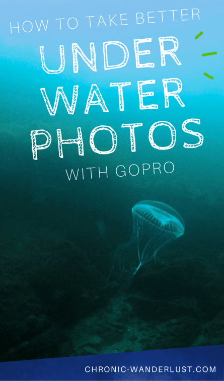 better underwater photos gopro diving pinterest