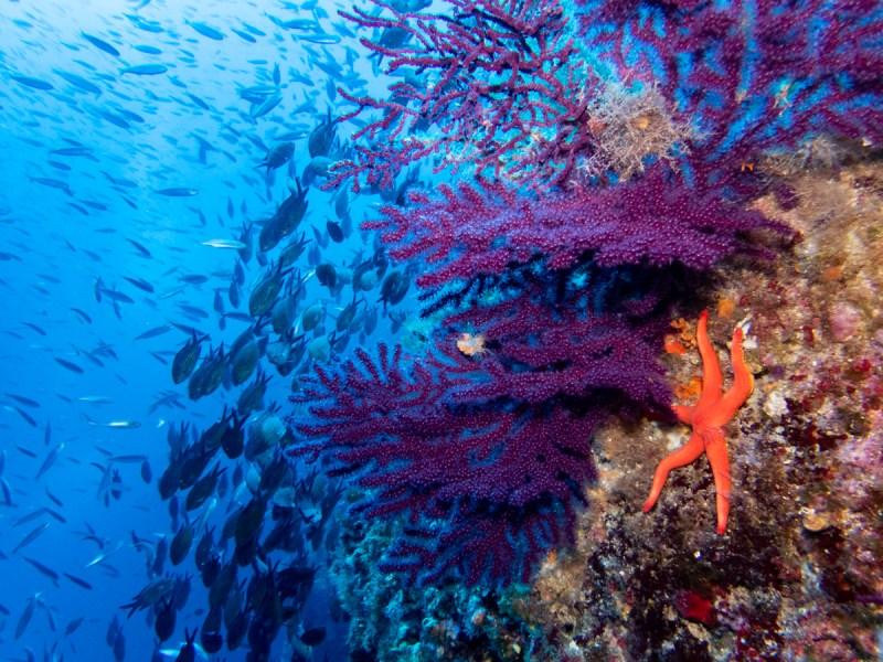 Murter Tauchen Kroatien Schönere Unterwasserfotos