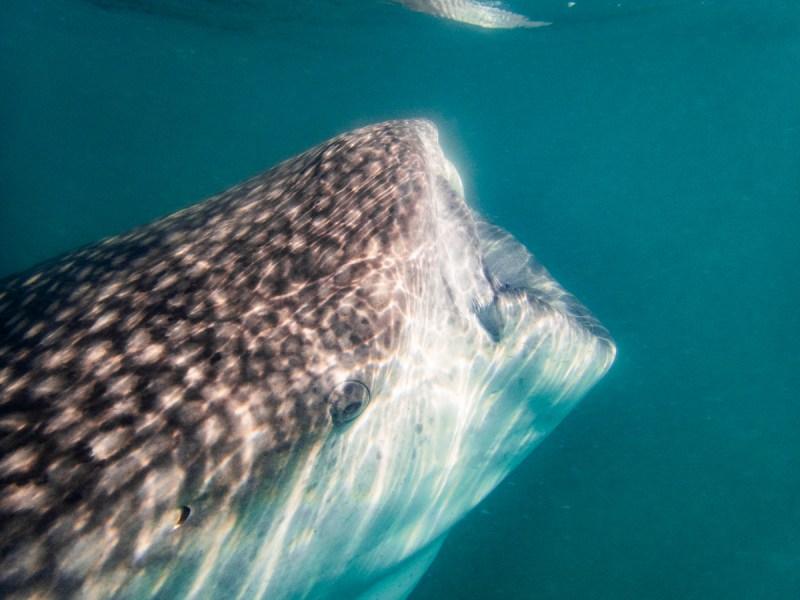 La Paz Walhaie Tagesausflug Mexiko Baja California