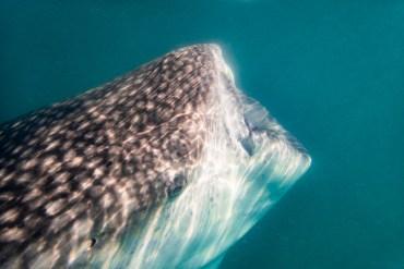 La Paz Day Trip: Whale Sharks & Street Art