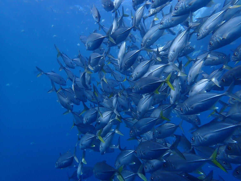 Bessere Unterwasserfotos vorher