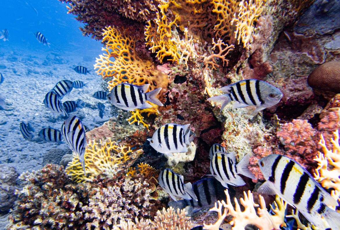 Scuba diving in Eilat Israel