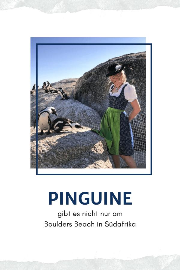 Pinguine gibt es nicht nur am Boulders Beach in Südafrika