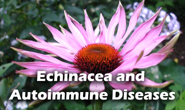 Echinacea and Autoimmune Diseases