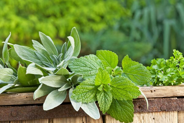 Lemon balm for pms