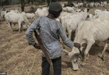 Nigerians have reacted differently to the setting up of a Fulani Radio herdsmen