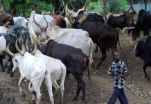Abia farmers fear herdsmen in the State