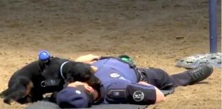 Poncho monitors the pulse of the police officer after performing a CPR