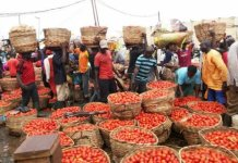 NAFDAC has warned against the consumption of rotten tomatoes