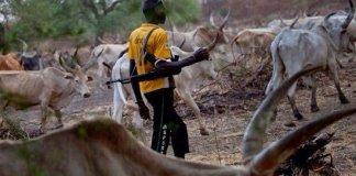 Suspected herdsmen kill 5 in Adamawa