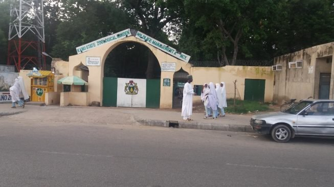 Drama as gorilla swallows in Kano prison