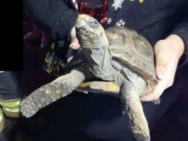 The reptile, 45, started a house fire by knocking a heat lamp onto his bedding