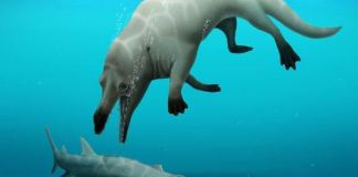 The partial skeleton of a four-legged whale was found in Egypt's Western Desert