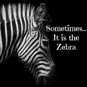 Zebra & caption - Sometimes it is the Zebra