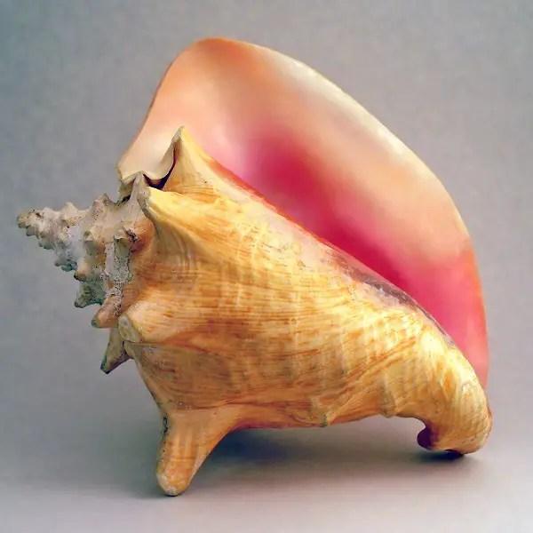 選擇題 - 海螺殼的英文怎麼說?