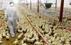 """الفيدرالية البيمهنية لقطاع الدواجن تفند خبر نفوق 20%  من الدجاج بسببب موجة """"الشركي"""""""