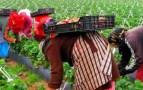 نساء الفراولة .. من الاعتداء إلى الاتجار بالبشر