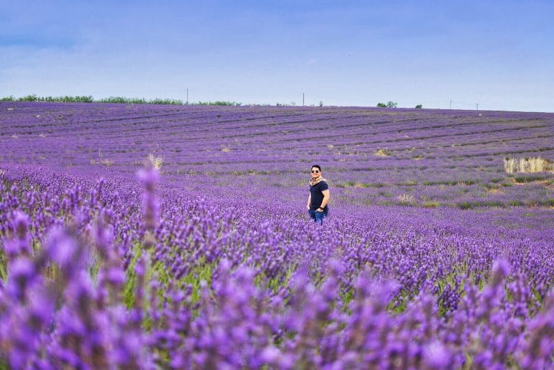 Chuckie Dreyfus - Lavender Fields - Provence France - Snow Caps