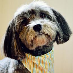 Dog Grooming Charleston