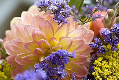moresatflowers_03S.jpg