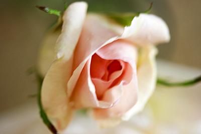 roses_roses_2S.jpg
