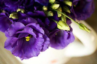 super_purple_2S.jpg