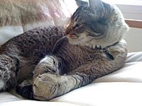 Roux-numa preguiça danada