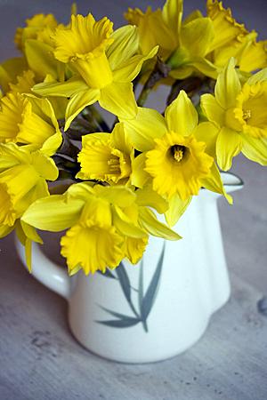 daffodil_1S.jpg