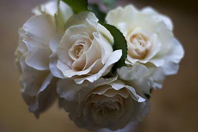 rosas-vintage_1S.jpg