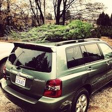 the xmas tree
