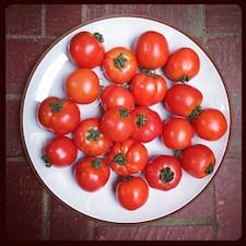 tomatesmay15.jpg