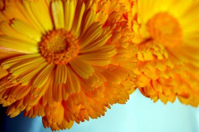 amarelo_gema_de_ovo_s.jpg