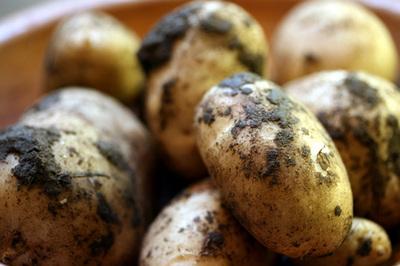 batatas_terra_.jpg