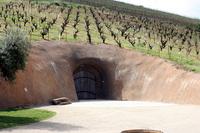 bella_vineyards_10.jpg
