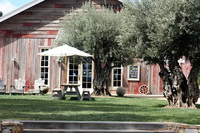 bella_vineyards_4.jpg