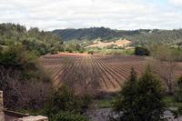 bella_vineyards_7.jpg