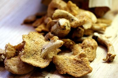 hedgehog_mushroom_s.jpg