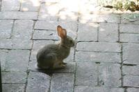 jack_tenant_rabbit_3s.jpg