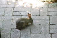 jack_tenant_rabbit_4s.jpg