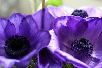 roxas_mas_nao_violetas_s.jpg