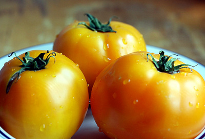 yellow_tomatoes_1_S.jpg